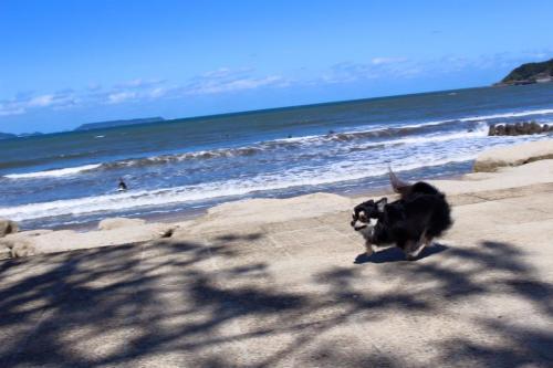 海沿いの美しい自然に恵まれた環境です。
