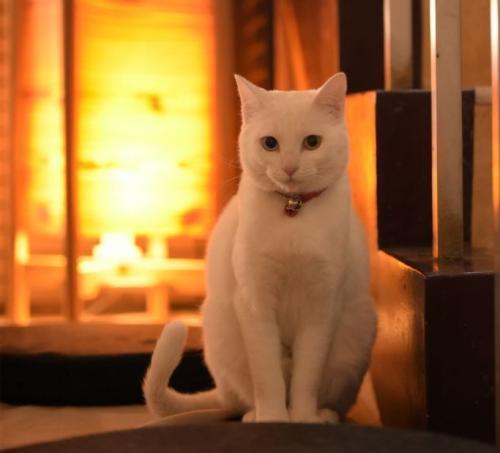 看板猫のいるアットホームな雰囲気です♪